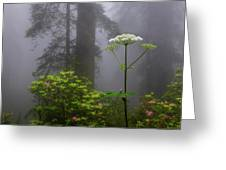 Redwoods By Crescent City 1 Greeting Card