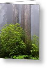 Redwoods By Crescent City 7 Greeting Card