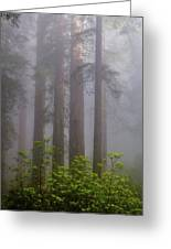 Redwoods By Crescent City 8 Greeting Card