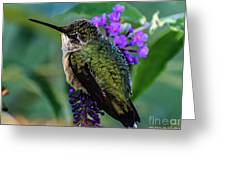 Rescued Ruby-throated Hummingbird Greeting Card