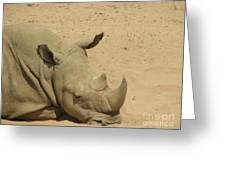 Resting Rhinoceros With His Head Down In A Sandy Area Greeting Card