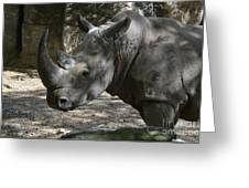 Rhino Standing In The Shade On A Summer Day Greeting Card