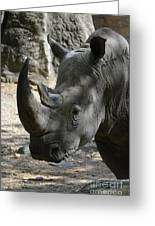 Rhinoceros With Two Horns Up Close And Personal Greeting Card