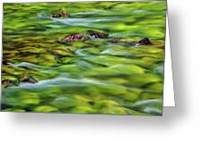 River Moss Greeting Card