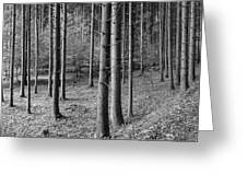 Road Passing Through Forest, Stuttgart Greeting Card