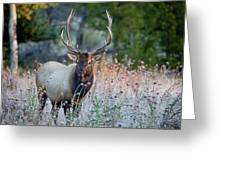 Rocky Mountain Wildlife Bull Elk Sunrise Greeting Card by Nathan Bush