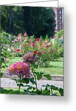 Rome Rose Garden Greeting Card