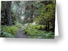 Roosevelt Grove Greeting Card
