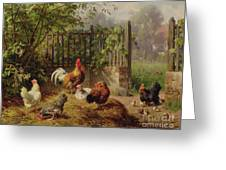 Rooster With Hens And Chicks Greeting Card