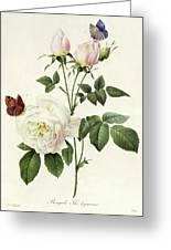 Rosa Bengale The Hymenes By Redoute Greeting Card