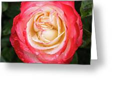 Rose And Rain - The Ice-cream Rose Greeting Card