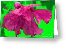 Rose Of Sharon Rain Drops Greeting Card