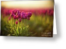 Rows Of Magenta Painterly Tulips Greeting Card
