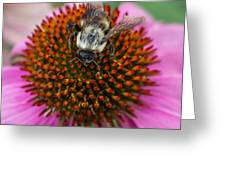 Rudbeckia Coneflower With Bee, Canada Greeting Card