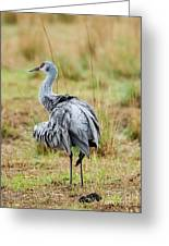 Ruffled Crane Greeting Card