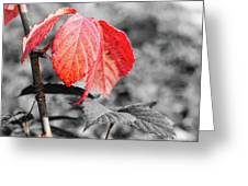 Rusty Leaves Greeting Card