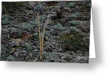 Saguaro Spines Greeting Card