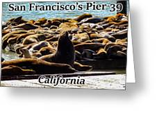 San Francisco's Pier 39 Walruses 1 Greeting Card
