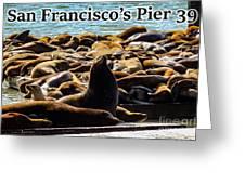 San Francisco's Pier 39 Walruses 2 Greeting Card
