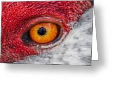 Sandhill Crane Eye Greeting Card