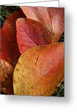 Sassafras Autumn Greeting Card