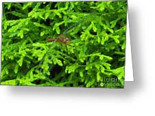 Scarlet Darter Male Dragonfly Greeting Card