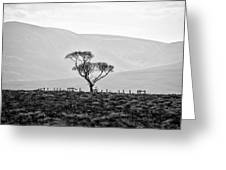 Scottish Highland Tree In Black And White Greeting Card