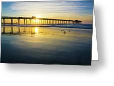 Scripps Pier Golden Sandpipers Greeting Card