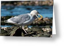Seagull Carrying Snail Greeting Card