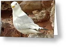 Seagull On Rock Greeting Card