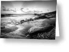 Seashells On The Seashore In Black And White Greeting Card