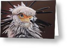 Secretary Bird Greeting Card