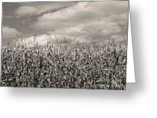 Sepia Field Of Corn Greeting Card
