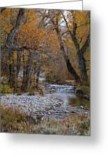 Serene Stream In Autumn Greeting Card