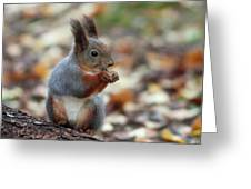 Shadow Boxing. Red Squirrel Greeting Card