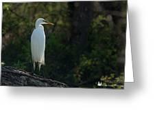 Shadow Heron Greeting Card