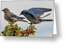 Sharing A Perch Greeting Card
