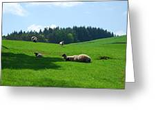 Sheep And Lambs In A Field Greeting Card
