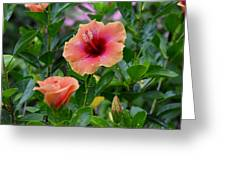 Show Off. Greeting Card