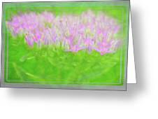 Showy Stonecrop Framed Greeting Card