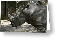 Side Profile Of A Large Rhinoceros With Two Horns  Greeting Card