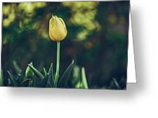 Silence Is Golden Greeting Card by Dheeraj Mutha