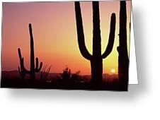 Silhouette Of Saguaro Cacti Carnegiea Greeting Card