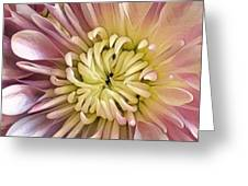 Simply Pink Greeting Card by Cindy Greenstein