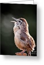 Singing Wren Greeting Card