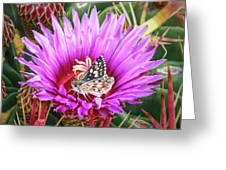 Skipper On Cactus Bloom Greeting Card