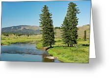 Slough Creek Greeting Card