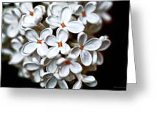 Small White Flowers Digital Greeting Card
