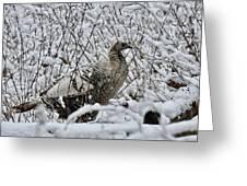 Smoke Phase Turkey 9623 Greeting Card