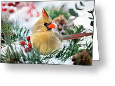 Snow Cardinal Greeting Card